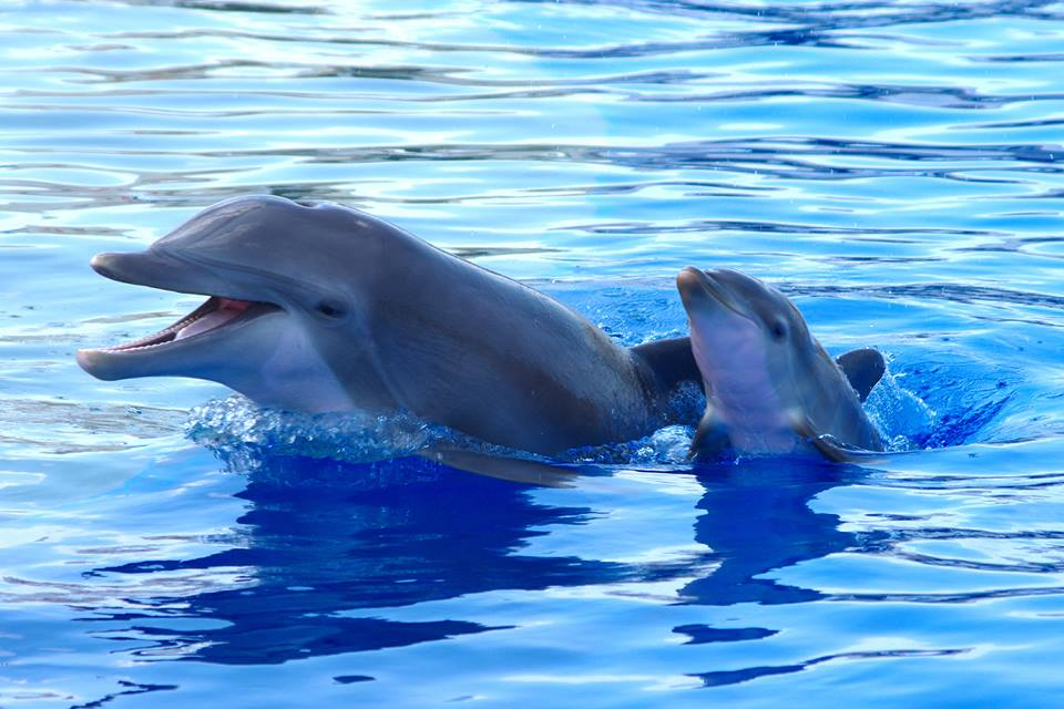 images of baby dolphins - photo #25