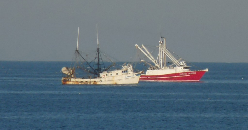 Lorraine Thompson: News of seaweed, shrimp boats at the beach
