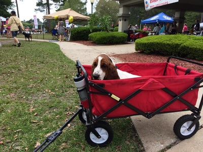 Dog Day Afternoon will be from noon to 4 p.m. Sunday, March 29 in Julington Creek. This photo shows the event in 2014. Contributed image