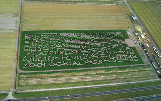 The 2015 Sykes and Cooper Corn Maze was designed with alligators from the St. Augustine Alligator Farm! The maze is open Oct. 3-25, Friday through Sunday, in Elkton off State Road 207 in St. Johns County. See more details in the event list below. Photo from www.sycofarms.com